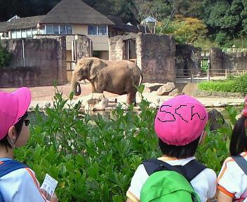 ゾウを見るSくん.JPG